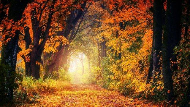 autumn-pixabay-3186876_1920