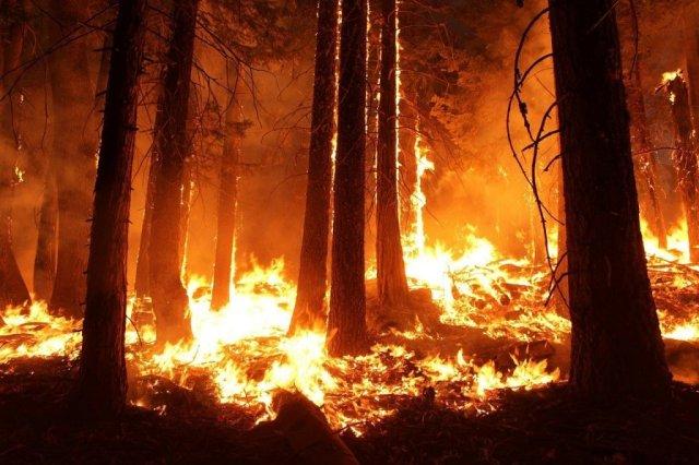 wildfire-pixabay-1105209_1280